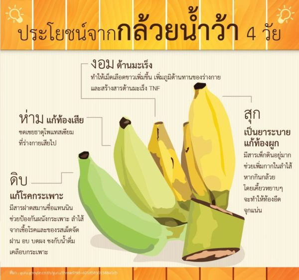 กล้วยน้ำว้า มีประโยชน์และดีต่อสุขภาพอย่างไร