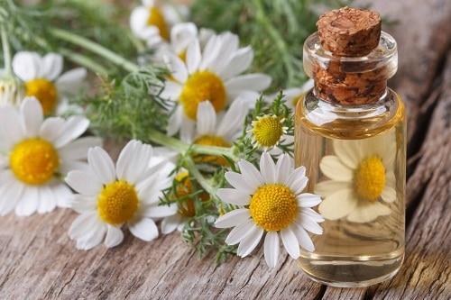 3 สมุนไพรกลิ่นหอม ที่มีผลดีต่ออารมณ์และสุขภาพ บอกเลยว่าใครที่เครียด ๆ อยู่ ส่งผลดีแน่นอน