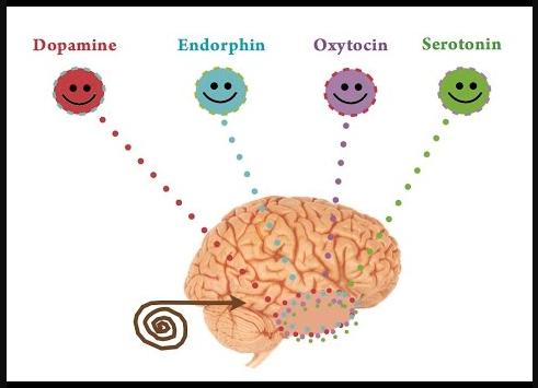 ฮอร์โมน ที่มีผลต่อสุขภาพกายและจิตใจของมนุษย์ทุกคน