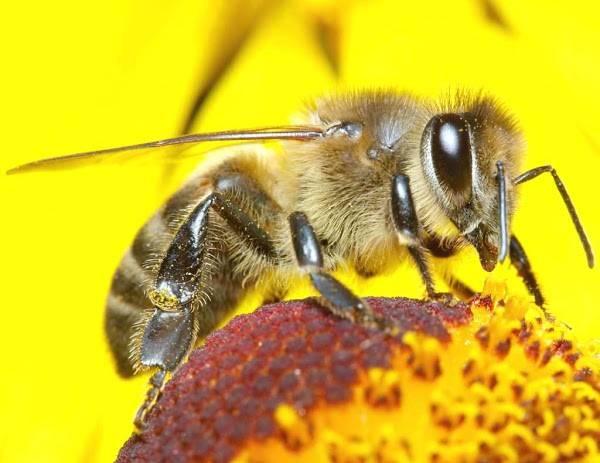 น้ำผึ้งจากเกสรดอกไม้ ต่างสายพันธุ์ มอบคุณค่าที่แตกต่าง ประโยชน์ดีๆ ต่อร่างกาย และช่วยบำรุงความงาม