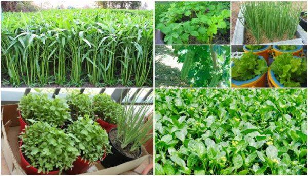 พืชมากคุณค่า กินแทนยา ต่อต้านโรค ฟื้นฟูสุขภาพแบบยั่งยืน